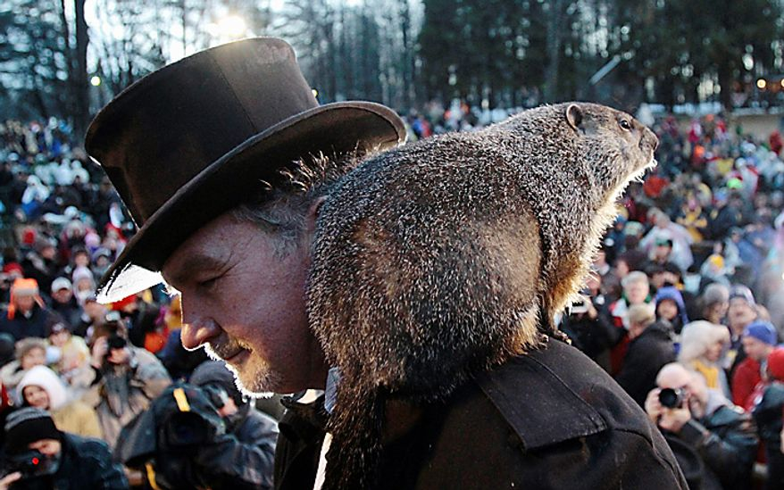 Punxsutawney Phil, the weather-predicting groundhog, stands on the shoulder of one of his handlers, John Griffiths, after the Groundhog Club claimed that Phil did not see his shadow and winter soon will end during Groundhog Day festivities on Wednesday, Feb. 2, 2011, in Punxsutawney, Pa. (AP Photo/Keith Srakocic)