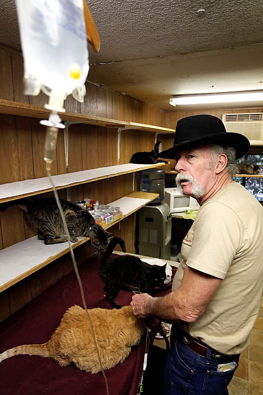 """Craig Grant treats a sick cat in one of his trailers at the Caboodle Ranch in Lee, Fla., on Thursday, Jan. 20, 2011. He's created a cat village with a town hall, church, cafe and even a Wal-Mart, but he's plagued by accusations of hoarding and mistreatment of the animals. """"They make me love me life,"""" he says. """"I never feel alone."""" (AP Photo/St. Petersburg Times, Lara Cerri)"""