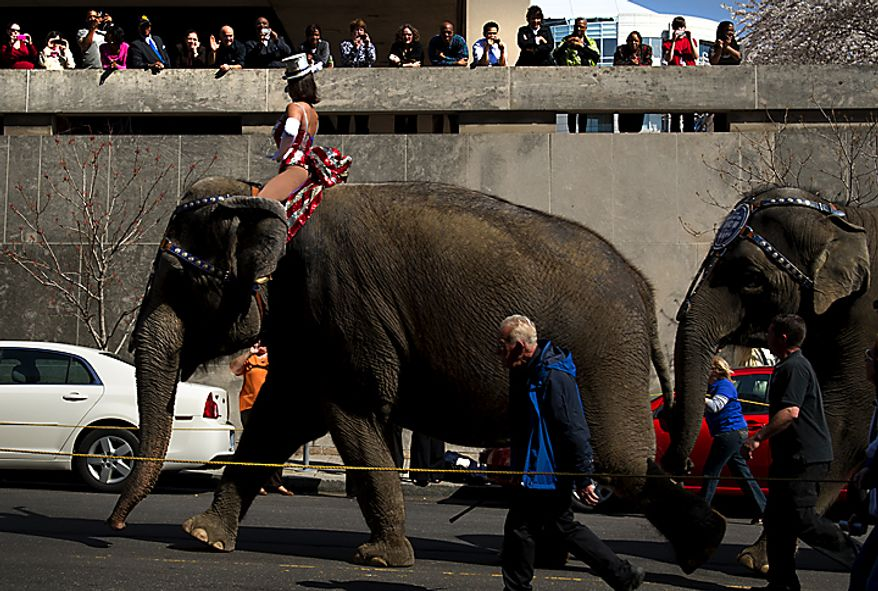 Spectators line the walls of an office building on Third Street Northwest in Washington for the Ringling Bros. and Barnum & Bailey Circus' annual Pachyderm Parade as it make its way to the Verizon Center on Tuesday, March 22, 2011. (Barbara L. Salisbury/The Washington Times)