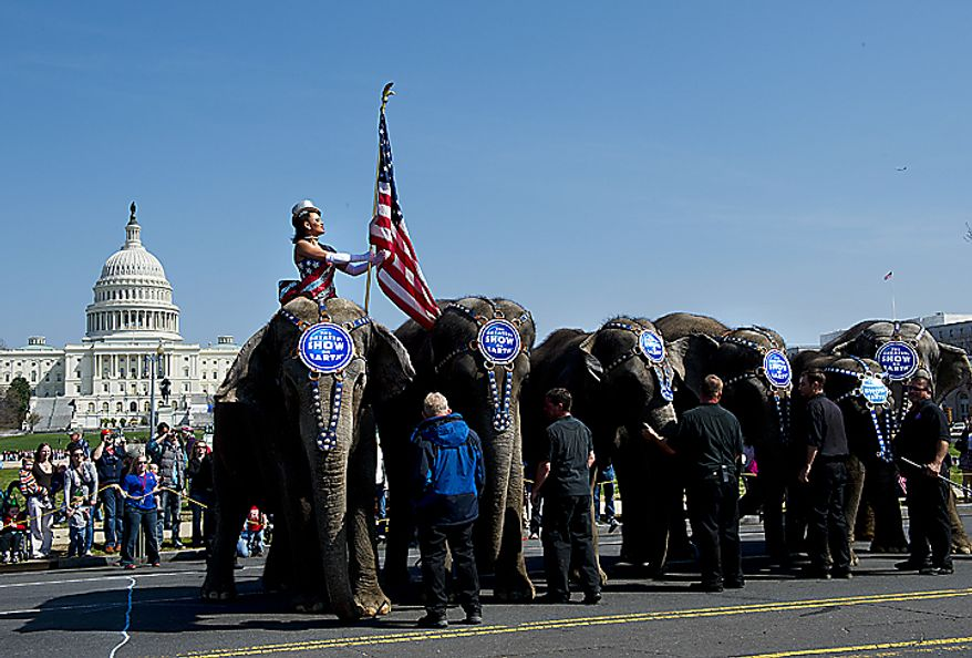 Elephants of the Ringling Bros. and Barnum & Bailey Circus stop in front of the U.S. Capitol in Washington on Tuesday, March 22, 2011, before making their way to the Verizon Center, where the circus will perform. (Barbara L. Salisbury/The Washington Times)