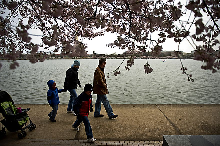 The Carpenter-Holmes family, from left, Kevin, 3, mom Amy, Nathan, 6, and dad Arthur, are bundled up as they walk along the Tidal Basin to look at the cherry blossoms, in Washington, D.C., Sunday, March 27, 2011. Arthur Carpenter-Holmes, whose family is from Alexandria, Va., said they had been coming to see the cherry blossoms for years and this is the coldest he can remember it being. (Drew Angerer/The Washington Times)