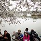 With sunshine and warmer temperatures Sunday, it was a beautiful day to relax under the cherry trees that rim the Tidal Basin. (Drew Angerer/The Washington Times)