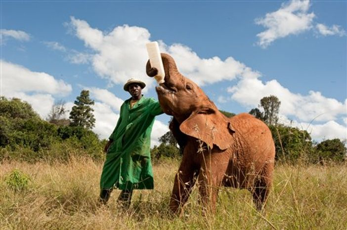 """In this publicity image released by Warner Bros. Entertainment Inc., Eve, the first wild-born calf of an elephant that was rescued and rehabilitated by Dame Daphne Sheldrick, is shown during the filming of,""""Born To Be Wild 3D.""""  The 40-minute documentary, narrated by Oscar winning actor Morgan Freeman, opens Friday, April 8, 2011, in IMAX theaters across the U.S. (AP Photo/Warner Bros. Entertainment Inc., Drew Fellman)"""