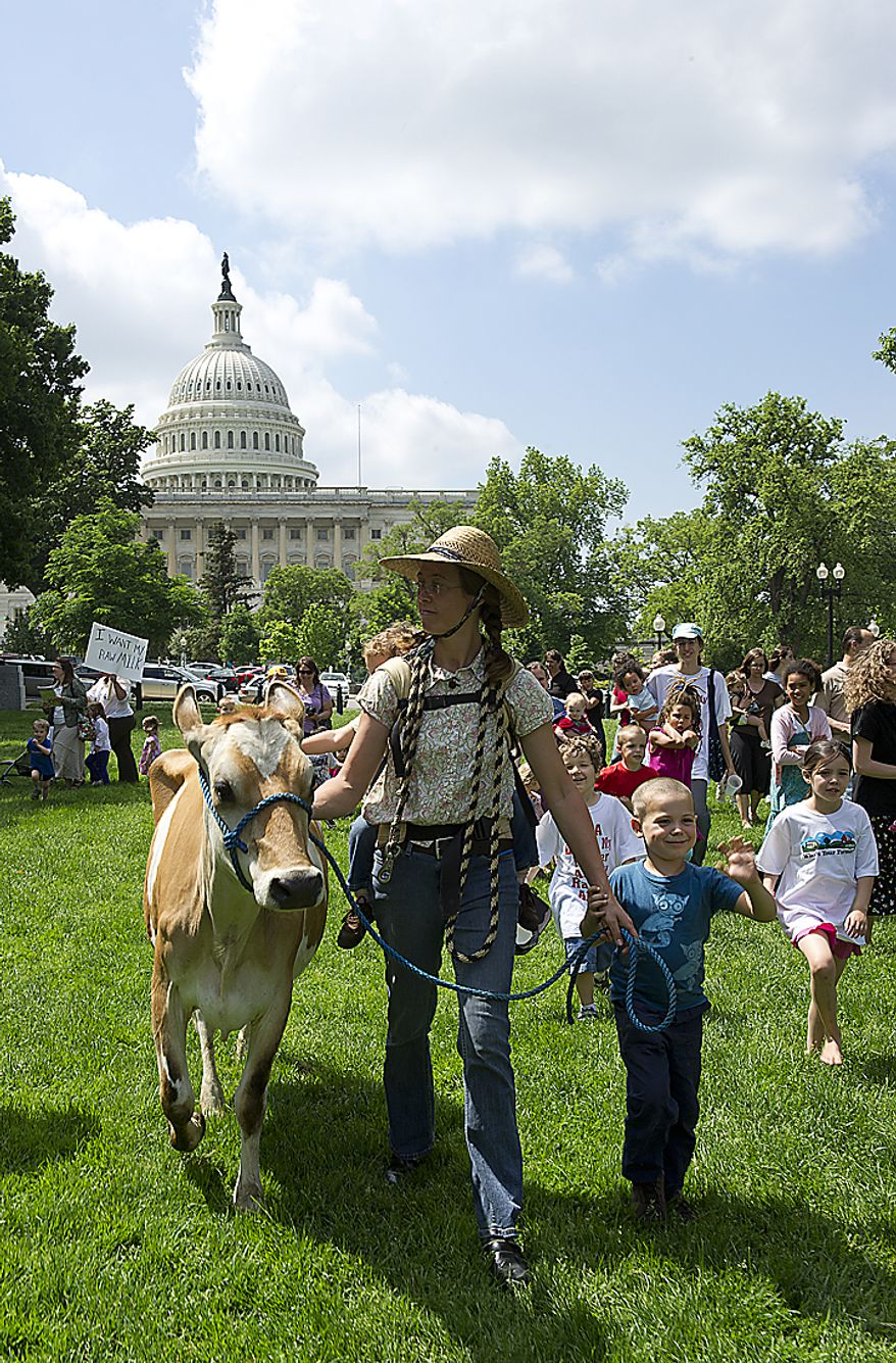 Leah Mack of Union Bridge, Md., walks Morgan the cow through Upper Senate Park in Washington, D.C., on Monday, May 16, 2011 so that she can milk the cow as part of a rally held by the organization Grassfed on the Hill to protest the sting operation the FDA conducted against Pennsylvania dairy farmer Dann Allgyer and his private buying customers. People were invited to drink fresh milk at the rally. (Barbara L. Salisbury/The Washington Times)