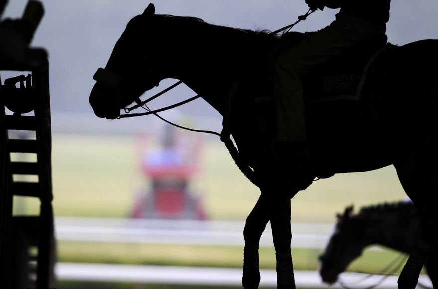 Horses walk around in the paddock while waiting for another horse race before the Belmont Stakes, Saturday, June 11, 2011, in Elmont, N.Y. (AP Photo/Julio Cortez)