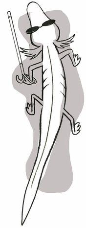 Illustration: Salamander by Alexander Hunter for The Washington Times