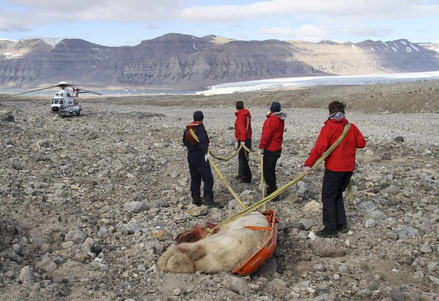 This image released by the District Governor of Spitsbergen's office shows the dead male polar bear that had attacked youths who were camping on a remote Arctic glacier as part of a high-end adventure holiday at Spitsbergen, Svalbard archipelago, in Norway, Friday, Aug. 5, 2011 . The polar bear was shot and killed by other members of the group. (AP Photo / Arild Lyssand / District governor of Spitsbergens office / via Scanpix)
