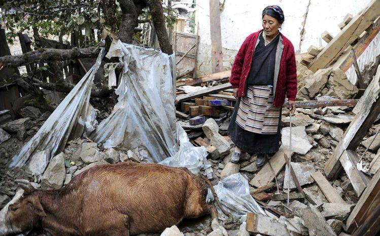 On Monday, Sept. 19, 2011, a villager in Yadong County in southwest China's Tibet Autonomous Region looks at a cow killed in a strong earthquake that hit neighboring Sikkim in northern India on Sunday evening. (AP Photo/Xinhua, Gesang Dawa)