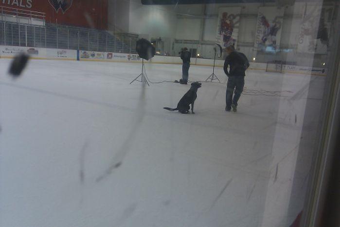 Jeff Halpern and his dog