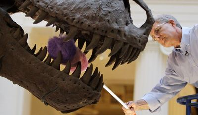 "**FILE** Bill Simpson, collections manager of fossil vertebrates at Chicago's Field Museum, dusts the teeth of the Tyrannosaurus rex skeleton known as ""Sue"" on display at the museum on May 12, 2010. (Associated Press)"