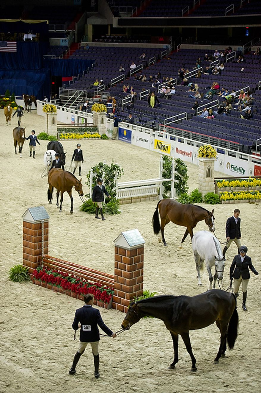 Riders walk their horses through the track after the 1st Year Green Working Hunter competition at the annual Washington International Horse Show on Oct. 25, 2011, in D.C. The event runs Oct. 25-30 at the Verizon Center and features top riders and horses competing from the U.S. and abroad. (Andrew Harnik/The Washington Times)