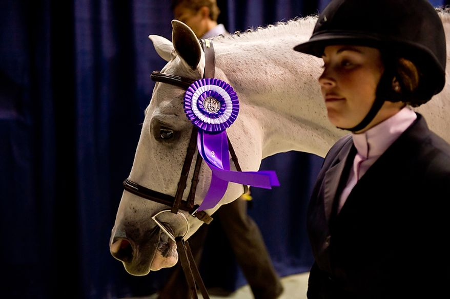 """Rider Jennifer Bliss of Westchester, N.Y., walks back to the stables with """"Elitere"""" after receiving a ribbon in the Model Class of the Green Conformation Hunter category at the annual Washington International Horse Show on Oct. 25, 2011, in D.C. The event runs Oct. 25-30 at the Verizon Center and features top riders and horses competing from the U.S. and abroad. (Andrew Harnik/The Washington Times)"""
