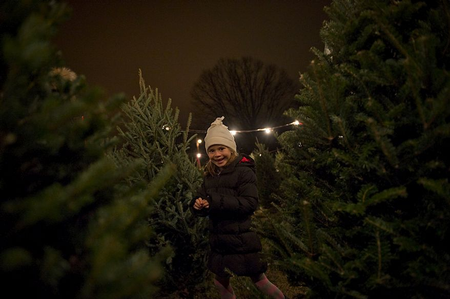 Julia Lielischkies, 6, of Washington runs through rows of Christmas trees as she joins her parents on Wednesday, Dec. 14, 2011, in the search for a tree at a lot operated by the Gheen family for the past 35 years at Wisconsin Avenue and Edmunds Street Northwest in Washington. Between Thanksgiving Day, when the lot opens, and Christmas Eve, the last day of business, this lot sells approximately 3,000 trees. (Rod Lamkey Jr./The Washington Times)