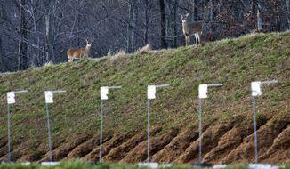 Deer roam atop a berm surrounding the shooting range at the FBI Academy in Quantico, Va., on Monday, Dec. 19, 2011. (AP Photo/Manuel Balce Ceneta)