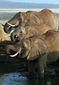 Kenya Africa Elephant_Live.jpg