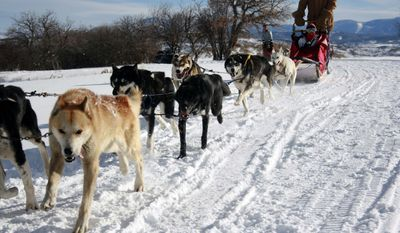 In this Dec. 28, 2008 photo released by Grizzle-T Dog & Sled Works/Dagny McKinley Grizzle-T Dog & Sled Works sled dogs are seen at Steamboat Springs, Colo. There's more to do at Steamboat than just skiing. (AP Photo/Grizzle-T Dog & Sled Works, Dagny McKinley)
