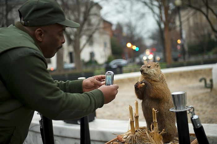 "National Park Service worker Steven Oliver takes a photo during the inaugural Groundhog Day event at Dupont Circle in Washington on Thursday, Feb. 2, 2012. D.C. Council member Jack Evans proclaimed Thursday as ""Potomac Phil Day."" The groundhog ""predicted"" six more weeks of winter. (Rod Lamkey Jr./The Washington Times)"