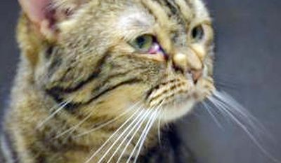 Miscellany: Pet Adoption Party