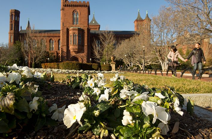 Pansies behind the Smithsonian Castle brighten the Mall on Monday, and cherry blossoms shouldn't be too far behind, thanks to a mild winter and forecast for a warm March. Peak season for the cherry blossoms will be announced March 1. (Barbara L. Salisbury/The Washington Times)
