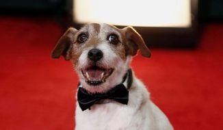 "Uggie, the canine star of the Oscar-winning film ""The Artist."" ** FILE **"