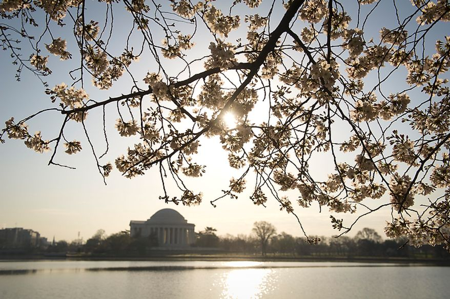 With the Jefferson Memorial in the distance across the water, cherry blossoms make an early arrival along the Tidal Basin in Washington, D.C., Thursday, March 15, 2012. (Rod Lamkey Jr/The Washington Times)