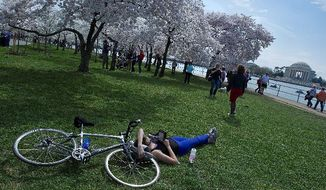 Cate Summers of Arlington takes a break from her bike ride to read at the Tidal Basin as others stroll through and photograph the cherry blossoms, in full bloom in time for the festival celebrating the 100th anniversary of Japan's gift of the trees. (Barbara L. Salisbury/The Washington Times)