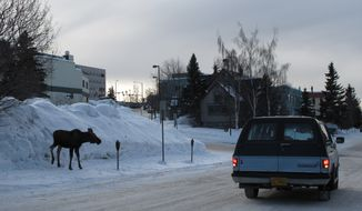 Deep snow dwarfs a juvenile moose in Anchorage, Alaska, on Thursday, March 15, 2012. (AP Photo/Rachel D'Oro)