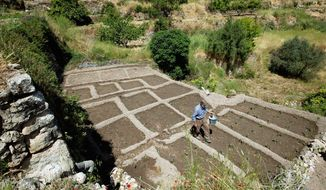 ** FILE ** Palestinian farmer Elayan Shami places eggplants in a maze to direct the water downhill from one terrace to another in his field in the West Bank village of Battir. Residents of Battir, one of the last West Bank farming villages using an irrigation system from Roman times, say their way of life is endangered as Israel prepares its West Bank separation barrier. (Associated Press)