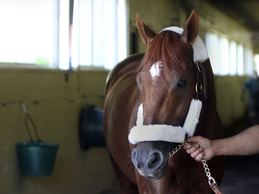 Kentucky Derby and Preakness winner I'll Have Another is led around his stable just after arriving at Belmont Park in New York on Sunday, May 20, 2012. (AP Photo/Seth Wenig)