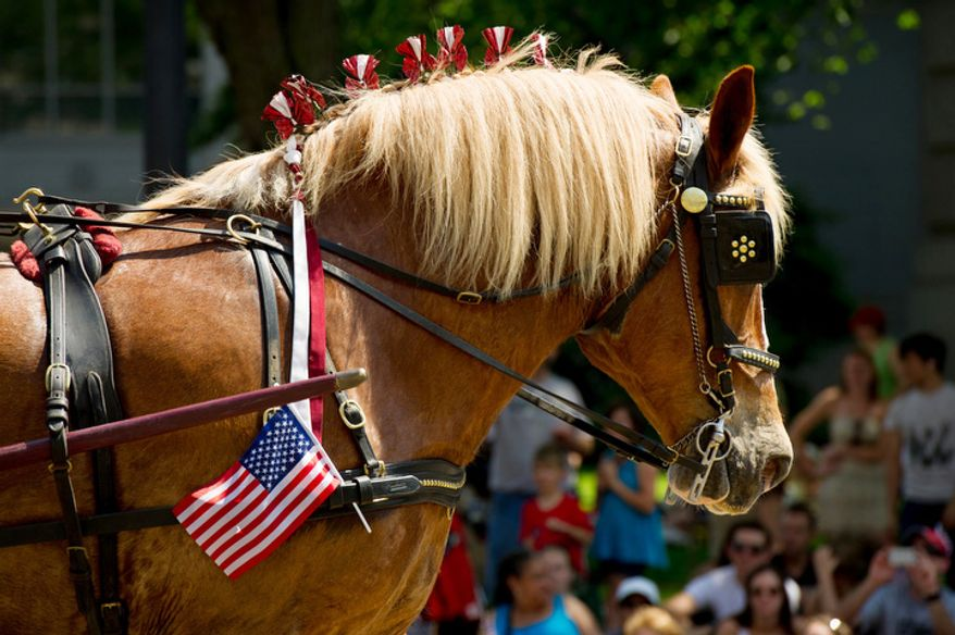 A patriotic horse participates in the Memorial Day Parade down Constitution Avenue. (Andrew Harnik/The Washington Times)