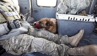 A U.S. Marine sits with his bomb-sniffing buddy aboard a helicopter during a medevac mission in Afghanistan's Helmand province in February 2010. The dog, which had stopped performing well possibly due to stress, according to his handler, was evacuated along with a wounded Afghan civilian. (Associated Press)