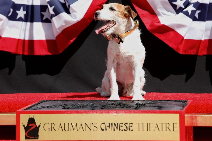 "After sharing star billing for ""The Artist,"" Uggie plays the lead Monday in a ceremony to cement his paw prints in the courtyard of Grauman's Chinese Theatre in Los Angeles. (Associated Press)"