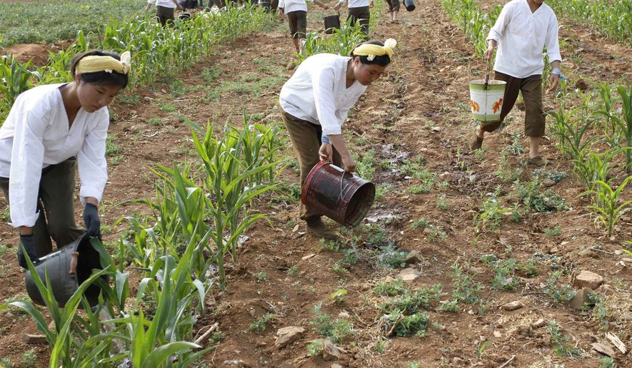 In this 2012 file photo, female North Korean soldiers water a cornfield in Kohyon-ri, North Korea. (AP Photo/Kim Kwang Hyon)