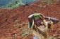 Uganda Lanslides_Lea.jpg