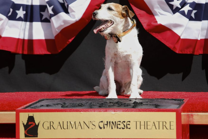 Canine star Uggie is honored at a pawprint ceremony at Grauman's Chinese Theatre on Monday, June 25, 2012, in Los Angeles. The event also marked the scene-stealing dog's retirement from show business. (AP Photo/Joe Kohen, Invision)