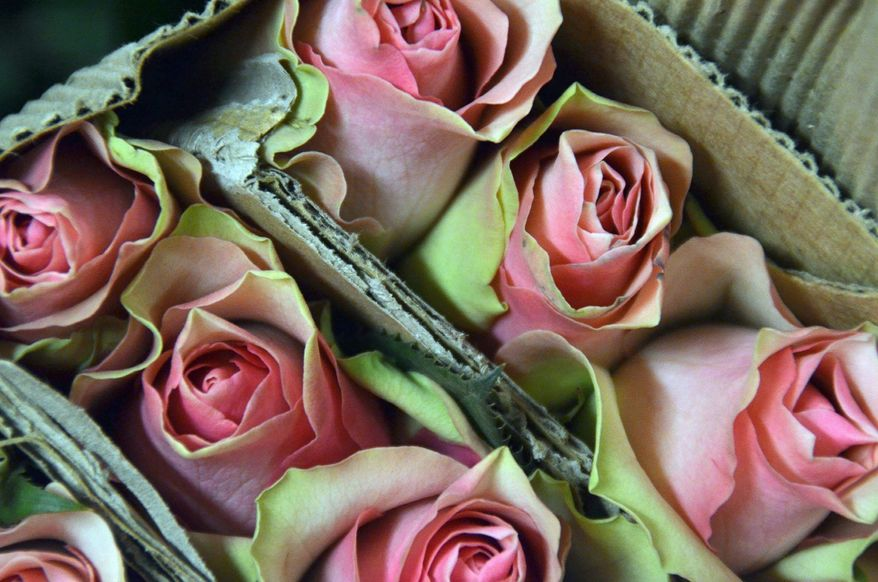 Roses imported from Ethiopia (Jessica Carpenter/The Washington Times)