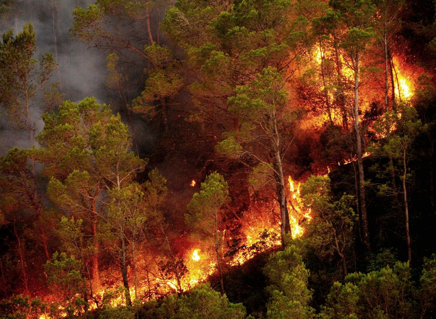 Smoke clings to the trees as fires burn in Boadella, Spain, on Monday. Fires broke out Sunday in several parts of the Catalonia region. A vacationing French family of five in a group of other tourists trying to escape flames went off a cliff and the father and a daughter were killed Sunday night. (Associated Press)