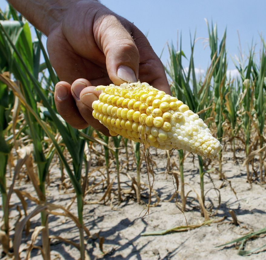Steve Niedbalski of Nashville, Ill., chops down his stricken corn for feed. Grocery prices are expected to rise more than usual. (Associated Press)