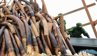 Soldiers arrange a pyre of elephant tusks and thousands of pieces of worked ivory as they prepare to burn stocks corresponding to roughly 850 dead elephants in Gabon. The World Wildlife Federation lauded the commitment to curb poaching. (Associated Press)