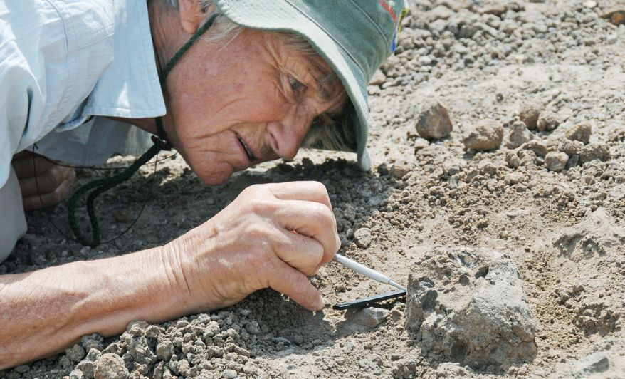 Meave Leakey carefully excavates the new face, designated KNM-ER 62000, found in northern Kenya. The Leakey team claims its discovery of the flat-faced fossil backs its claim that the human family tree sprouted long-lost branches. (Associated Press)