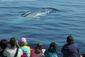 Whale Watching Bonanz_Star.jpg