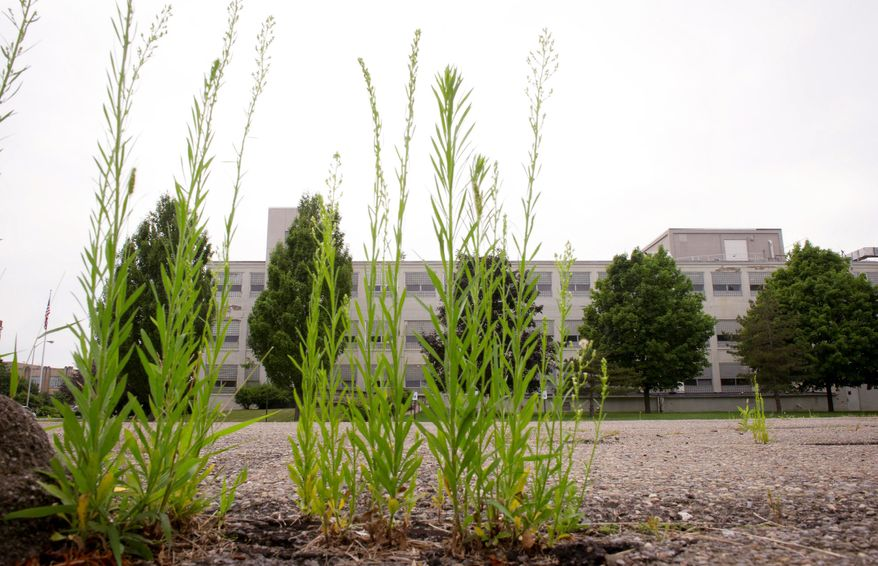 Weeds grow high in the parking lot of some of the buildings that were a part of the once vibrant IBM campus in Endicott, N.Y. Today, many of the buildings are closed or used by other businesses. IBM workers today face less secure-futures.