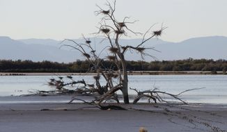 A fallen tree supports numerous heron nests in the mud of Southern California's Salton Sea in December 2010. (AP Photo/Lenny Ignelzi)