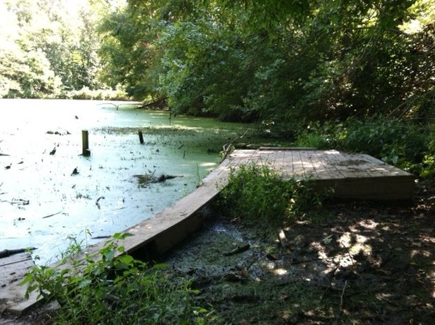 The pond at the Hidden Pond Nature Center in Springfield, where a rabid beaver jumped out of the water and chased a group of children on Saturday (Meredith Somers/The Washington Times)