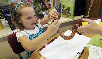 In this Sept. 11, 2012, photo, Hailey Fink gets acquainted with a corn snake in the first grade classroom of Dawn Slinger in Farmington, Minn. Experts say many children who have mastered video games before entering first grade have never even had a starter pet. Maryland-based Pets in the Classroom project is offering grants to help teachers pay for pets, cages, tanks and supplies of food. It issued its 10,000th grant this summer. (AP Photo/Jim Mone)