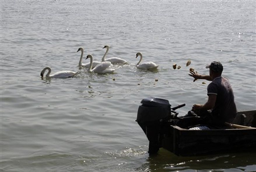 Fisherman Renato Grbic feeding swans near the Pancevo Bridge over the Danube river in Belgrade, Serbia, Tuesday, Sept 18, 2012. Grbic has saved the lives of 25 people who attempted to kill themselves by jumping from a nearby bridge. (AP Photo/Darko Vojinovic)