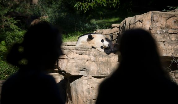 As two women look on, giant panda Mei Xiang relaxes in the sun in her area at the National Zoo in Washington, D.C., on Oct. 10, 2012, prior to a press conference regarding the cause of the recent death of the panda's newborn cub. (Rod Lamkey Jr./The Washington Times)