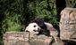PANDA_WEB_0006_20121011