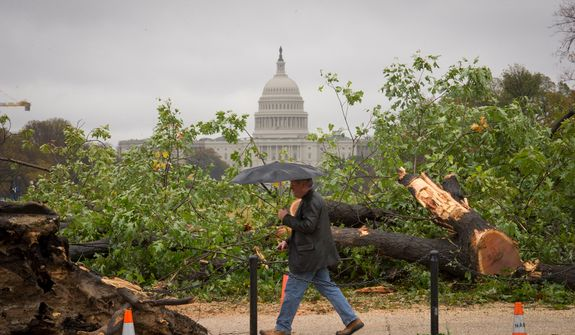A man passes by a fallen tree on 14th Street SW on the National Mall in Washington, D.C., Tuesday, Oct. 30, 2012, the day after Hurricane Sandy slammed into the region. (Rod Lamkey Jr./The Washington Times)