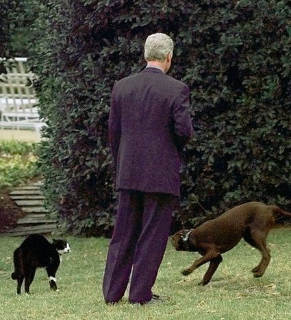 President Clinton struggled in vain to get his dog Buddy and cat Socks to become friends. Outside the Oval Office in January 1998, Socks stood his ground until Mr. Clinton and Buddy made their exit. (Associated Press)